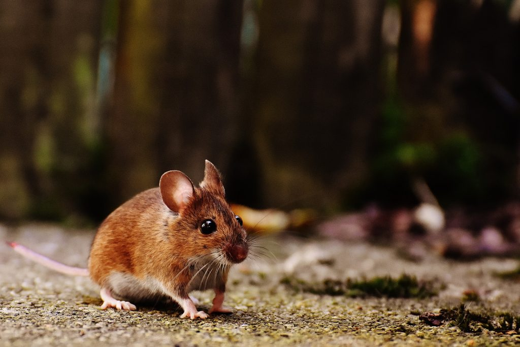 mouse care philadelphia PA