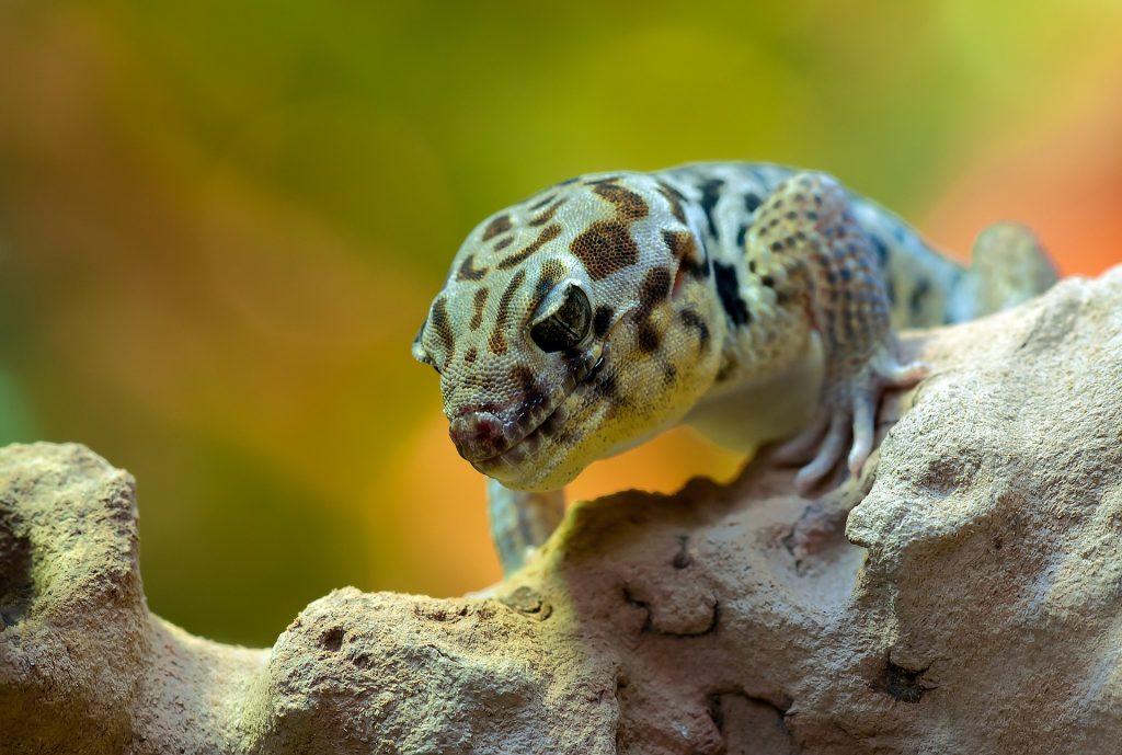 gecko care philadelphia PA